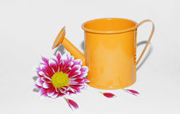 Flower bud and watering can Royalty Free Stock Image