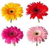 Flower buds. Of different colors on a white background. Set Royalty Free Stock Photos