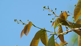 Flower buds and leaf shaking with the wind stock footage