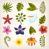 Flower buds and leaves. Colorful buds and leaves of tropical jungle flowers and trees Royalty Free Stock Photo