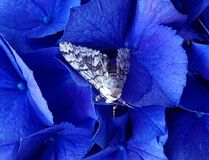 Flower bug. Moth in flower Stock Photos