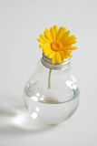 Flower in a bulb Stock Photos