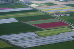 Flower bulb cultivation. Is an economic activity in the provinces of North Holland, South Holland and Flevoland. The colourful flower fields that have come to Royalty Free Stock Photo