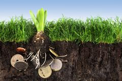 Flower bulb with roots in coins growing up in the green grass la. Wn with soil against the blue sky, concept for investment in environmental protection or Stock Images