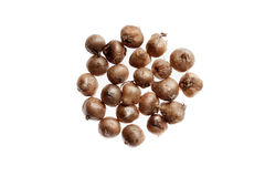 Flower bulbs isolated on white background. Royalty Free Stock Photos