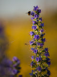 Flower,  bumblebee and spider Royalty Free Stock Images