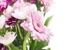 Flower bunch with pink gerberas, isolated Stock Photography