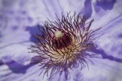 Flower Bunn Stock Photos
