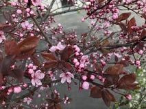 Flower bush. Pink flower beautiful Stock Images