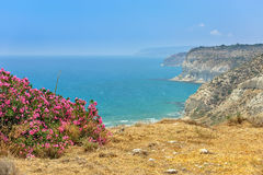 Flower bush on sea coast Royalty Free Stock Image