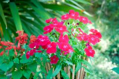Flower Bush in a Wooden Pot with light flare stock image