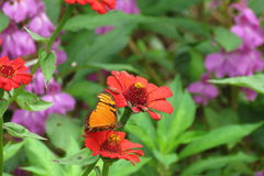 Flower and buterfly, summer, spring Royalty Free Stock Images