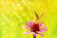 Flower and butterfly Royalty Free Stock Photography