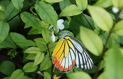 Flower and butterfly 107. Stock Image