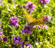 Flower and butterfly Stock Photos