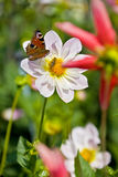 Flower with butterfly and bee inside Royalty Free Stock Photo