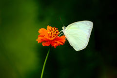 Flower and Butterfly Stock Image