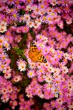 Flower and butterfly. In kastl Park Royalty Free Stock Image