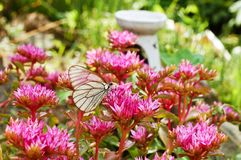 A butterfly sits on a bright flower in clear sunny weather. stock image