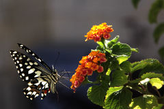 Flower, Butterfly, Summer  Green, beautiful Stock Photography