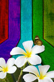 Flower and butterfly on wooden. Background Royalty Free Stock Photos