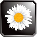 Flower button Royalty Free Stock Photography
