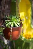 Flower in a cache-pot landscape design Stock Photography