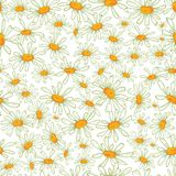 Camomile seamless pattern. Flower camomile seamless pattern background. Daisies medical vector sketch illustration Stock Photos