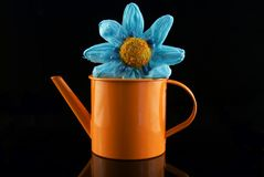 Flower can. Metal water can with paper flower Royalty Free Stock Image