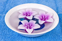 Flower candles  in bowl of water Stock Photo