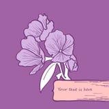 Flower card. Beautiful gentle purple flower card royalty free stock photography