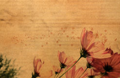 Flower on cardboard Royalty Free Stock Images