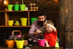 Flower care watering. Soil fertilizers. Father and son. happy gardeners with spring flowers. bearded man and little boy stock photography