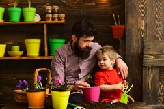 Flower care watering. Soil fertilizers. Father and son. happy gardeners with spring flowers. bearded man and little boy. Flower care watering. Soil fertilizers royalty free stock photos