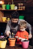 Flower care watering. Soil fertilizers. happy gardeners with spring flowers. Father and son. Fathers day. Family day. Greenhouse. bearded men and little boy stock photos