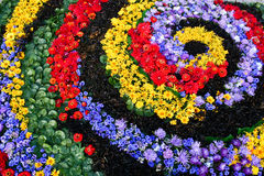 Flower carpet. Floral carpet made of colorful flowers royalty free stock images