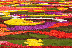 Flower carpet 2008. Flower carpet-2008 in Brussels on Grand-Place - close-up Royalty Free Stock Image