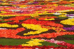 Flower carpet 2008. Flower carpet-2008 in Brussels on Grand-Place - close-up Stock Photography