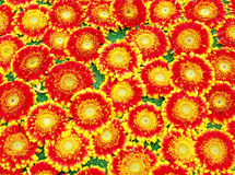Flower carpet Royalty Free Stock Images