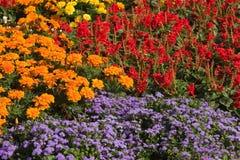 Flower carpet stock images