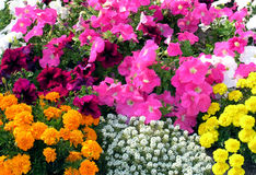 Flower carpet. A different flowers combine in garden landscape arrangement Stock Images