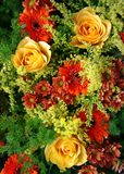 Flower carpet. Mixed bouquet in bright colours Stock Images
