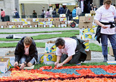 Flower Carpet on Grand Place, Brussels 2014 Royalty Free Stock Images