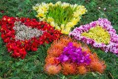 Flower carpet. Madeira Flower Festival (Festa da Flor). Funchal, Portugal Royalty Free Stock Photo