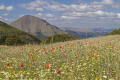 Flower carpet in the Sibillini Stock Photography