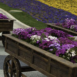 Flower carts Royalty Free Stock Photography