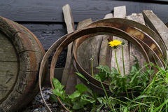 Flower and Cask Barrels. Royalty Free Stock Image