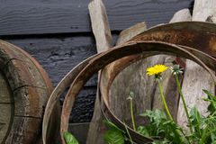 Flower and Cask Barrels. Stock Photography