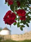 Flower with castle on the background Royalty Free Stock Photo