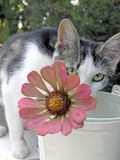 Flower and cat Royalty Free Stock Photography